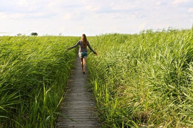 high-grass-1504278_960_720