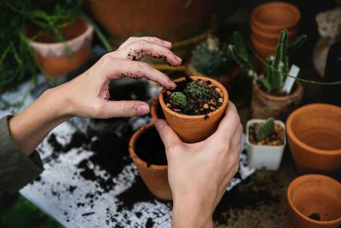 person holding green cactus on pot